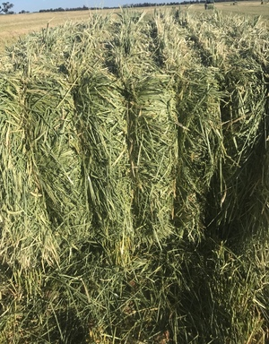Barley hay, See feed test, baling now, Road train access