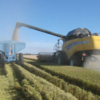 Strong yields boost Riverina Rice Harvest