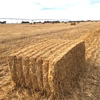 300 Tonne Wheaten Straw, 8x4x3 bales avg 400+ kg/Bale.