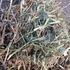 Quality Vetch Hay for Sale