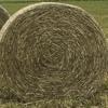 Ryegrass Hay Rolls x 400 ### Discount Bulk Buy $35.00+gst The Lot ###