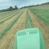 Wanted vetch and cereal crops on a share