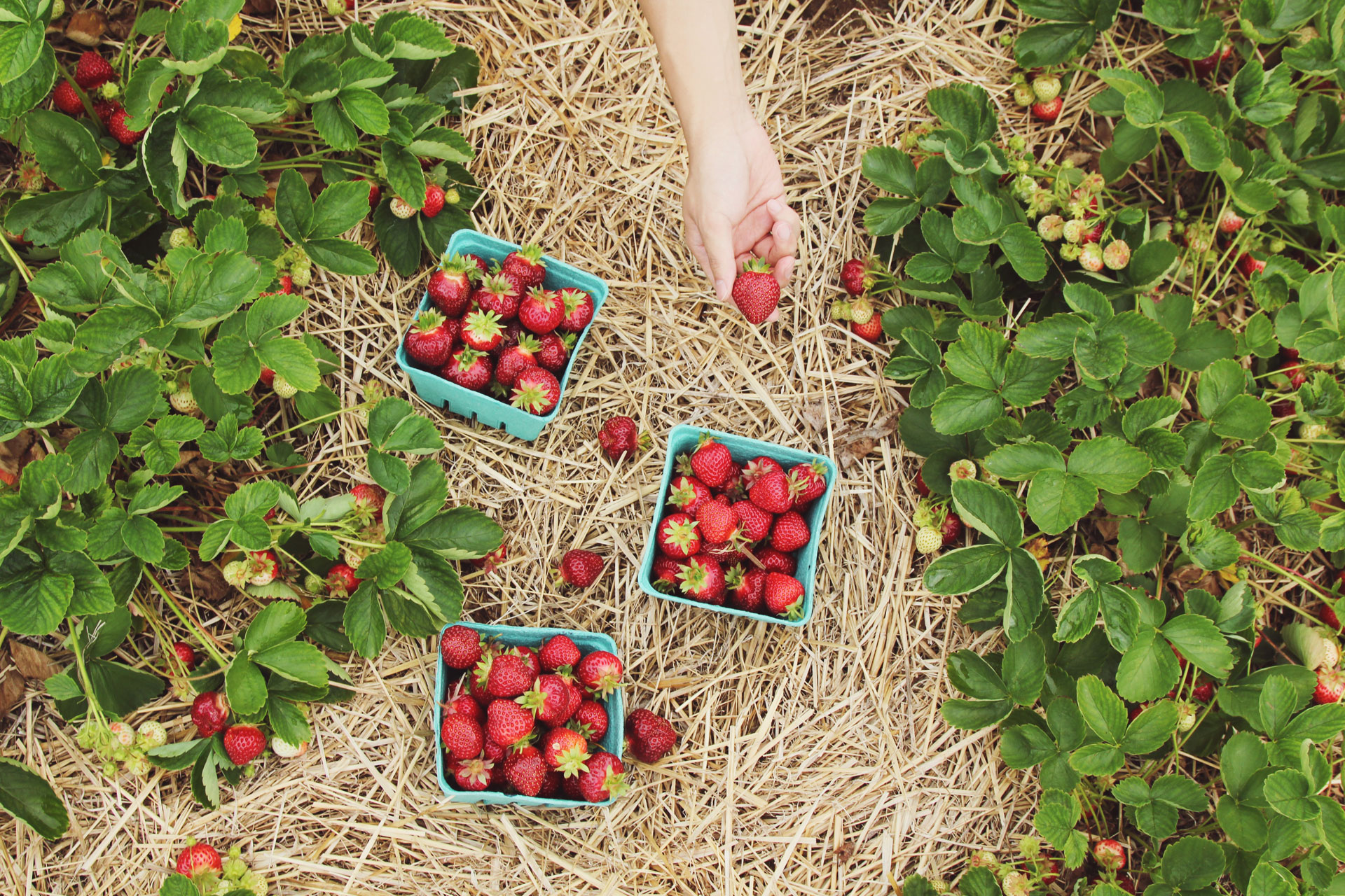 Summer Produce to Stock up on While It's in Season
