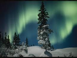 Tree and aurora borealis