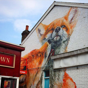 Foxes on the side of a house.