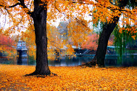 Happy Autumn! Autumn Leaves, courtesy of Amazon