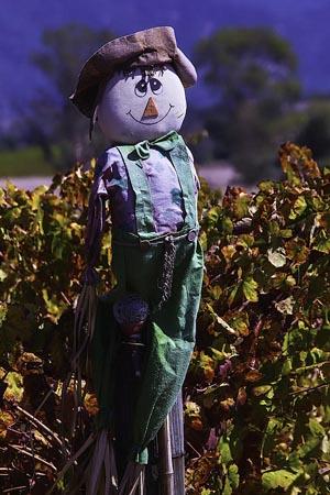Scarecrow, (c) Garry Gay
