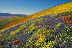 Spring Wildlflowers, image from Sierra Club.