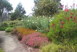 Heather Border, Mendocino Coast Botanical Garden