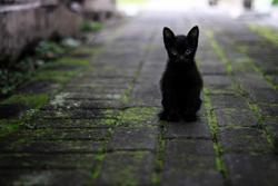 Black Kitten. Image courtesy of Rover.com