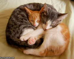 From funny cats, two sleeping cats. Is this a hibernaculum?