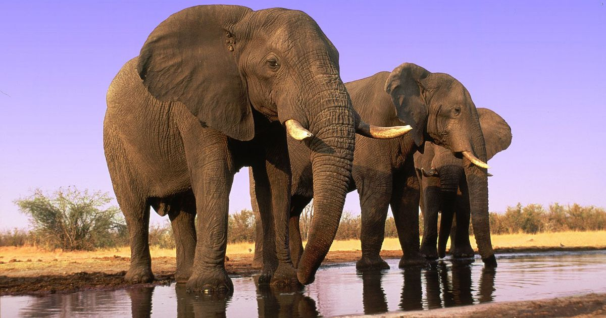 WorldElephantDay