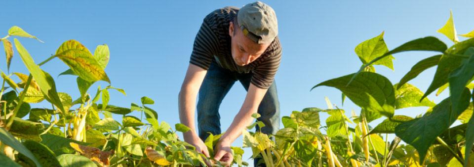 Banner-farmer