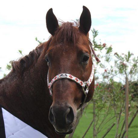 Cabresto Boots Horse Estampado