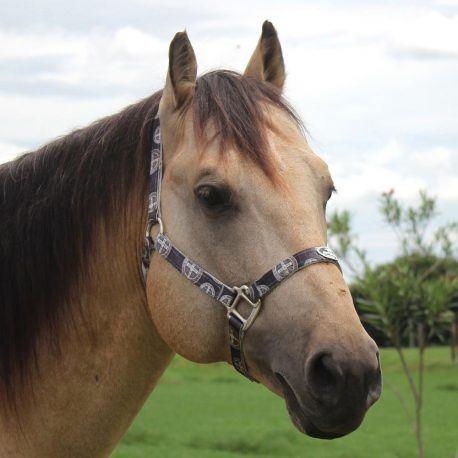 Cabresto Boots Horse medalha de São Bento Preta