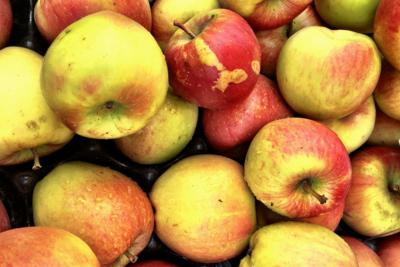 Thumb 400 various farms organic ugly apples mixed variety lb