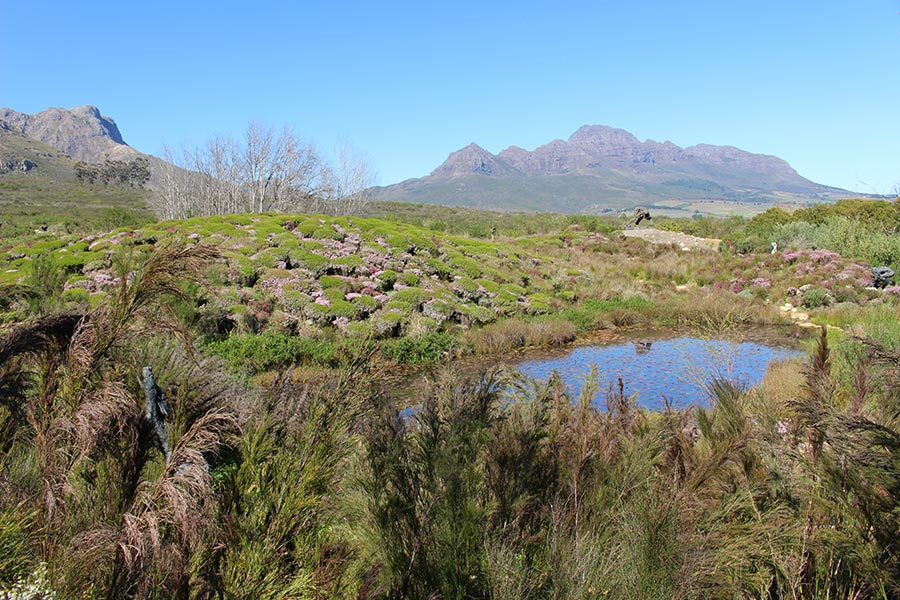 The sculptural landscape set against the foothills of the Stellenbosch Mountains.