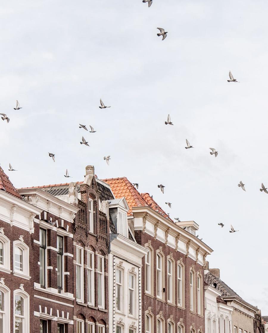 Birds flying over building