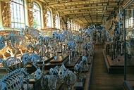 Noah's Ark is Alive (and Dead) in Paris