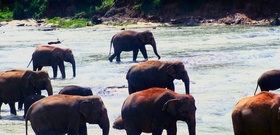 Sri Lanka: Where the Wild Things Are