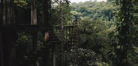 Lost in a Dream in the Surrealist Garden of Mexico