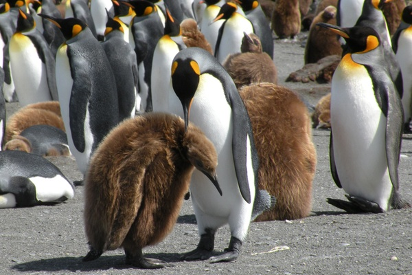 Eye Candy: Penguins!