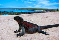 Become One with the Animals of the Galapagos