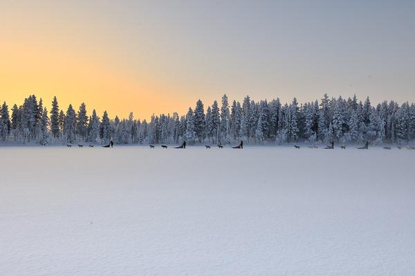 Dog Sledding in Swedish Lapland