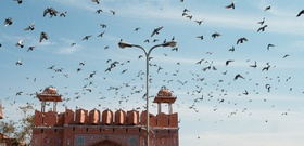 Little Black Book: A Chef's Tour of Jaipur