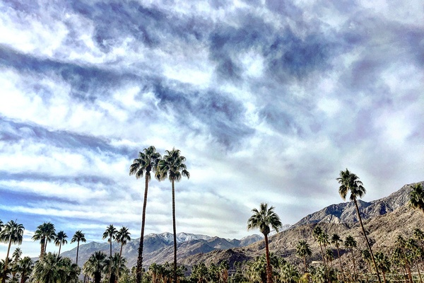 The palms and mountains of Palm Springs, California.