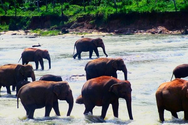 Sri Lanka: Where the Wild Things Are