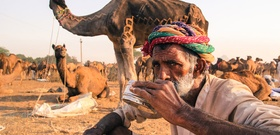 Camel's Milk Chai in Pushkar