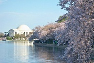 Cherry Blossoms Aren't the Only Things Blooming in Washington, D.C.