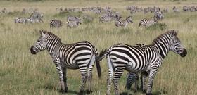 A Wild Romance: Playing House in the Kenyan Bush