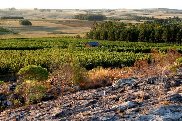 Alto de la Ballena winery in Maldonado, Uruguay