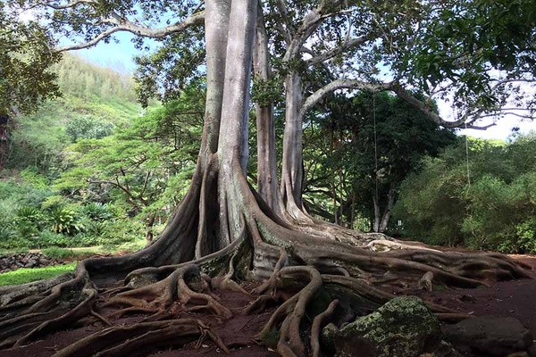 Kauai's South Shore Secrets