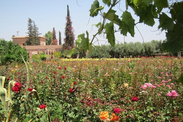 The Garden of Eden Is in Marrakech