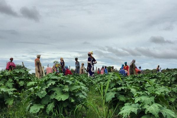 Women fieldworkers in Senegal