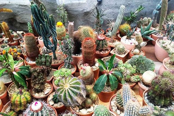 Hot Cactus NYC