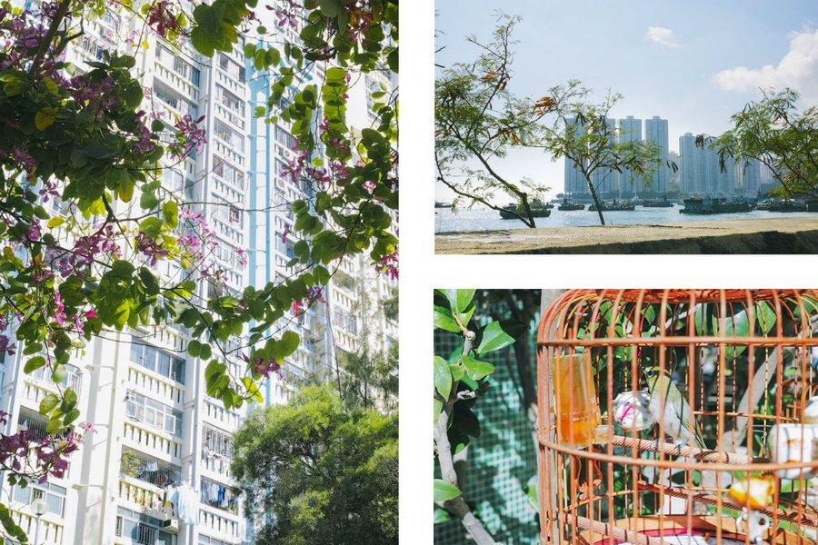 Nature in the Urban Jungle