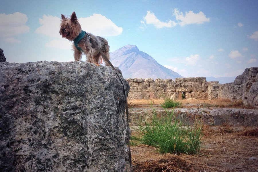 Himera Archeological Dog