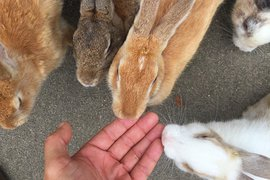 Okunoshima, Rabbit Island, Japan