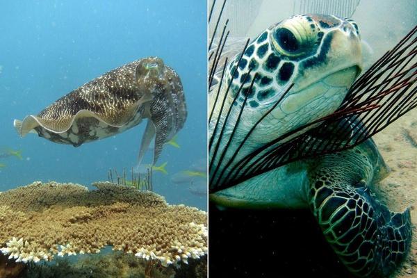 Sea Creatures in Nikoi Island
