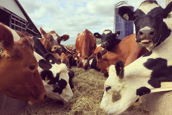 Kriemhild Dairy Farms