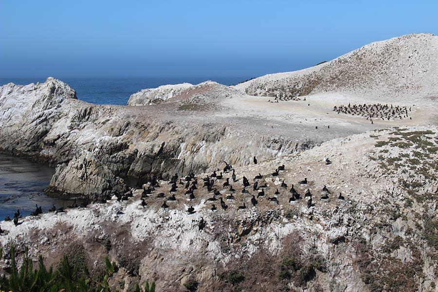 Point Lobos Natural Reserve - Big Sur, California