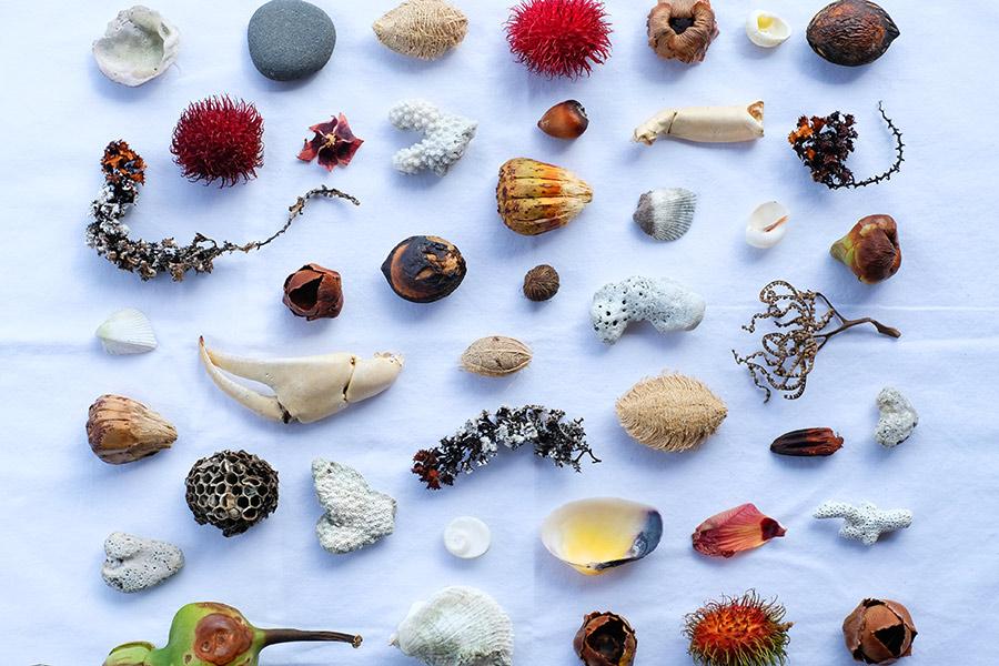 Seashell stil life in Tahiti, French Polynesia - Jasoonkim