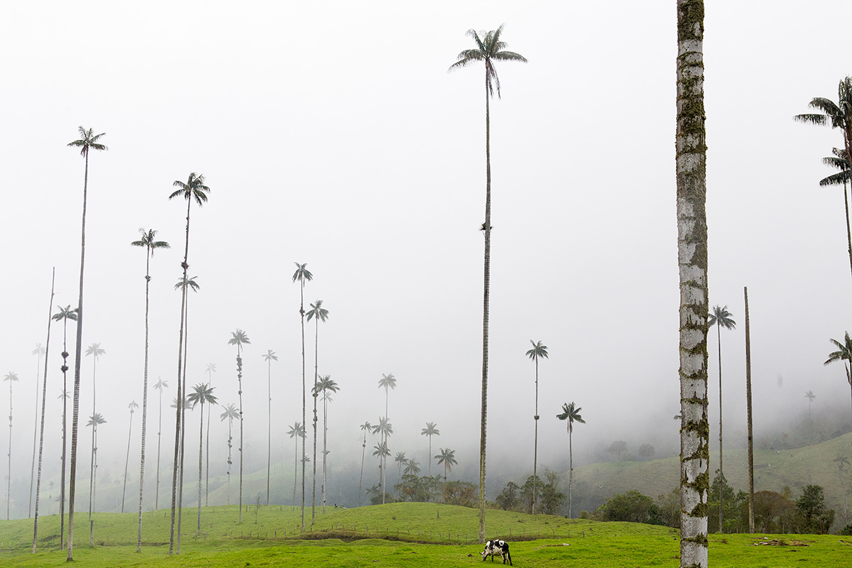 Cocora Valley, Colombia - Nathan Legiehn Photography