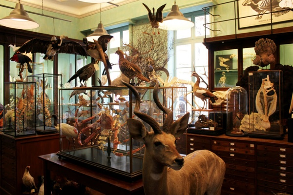 Deyrolle Taxidermy
