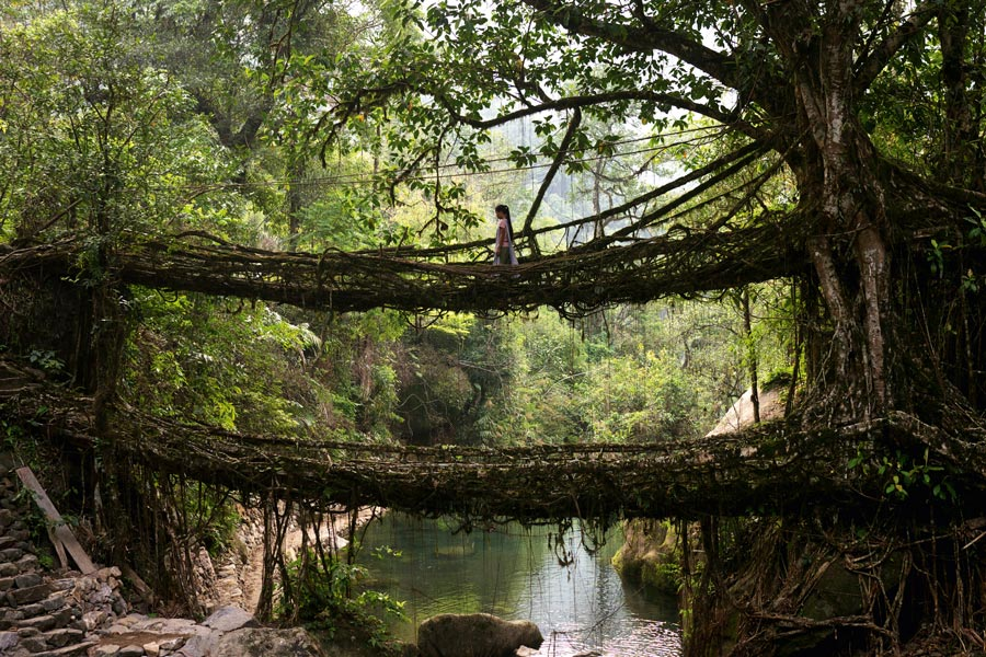 India Root Bridges