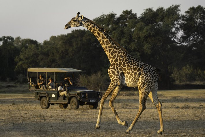 The Bushcamp Company Walking Safari in Zambia